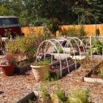 prepper_garden