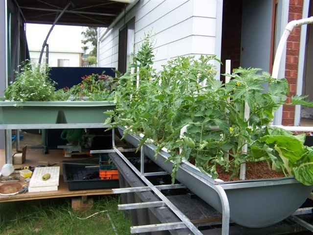 How to build a vertical aquaponic system step by step