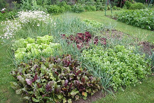 Creating the Backyard Garden of Eden.How To Grow an Organic Garden ...