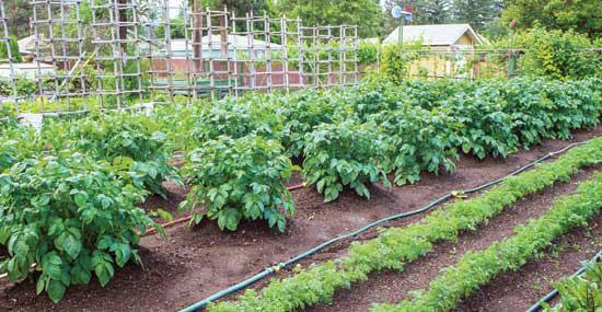 Drip Irrigation Design For Vegetable Garden raised bed snip n drip soaker system 1 Summary Drip Irrigation