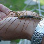 dangerous bugs