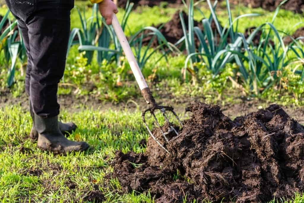 which vegetables do not like manure