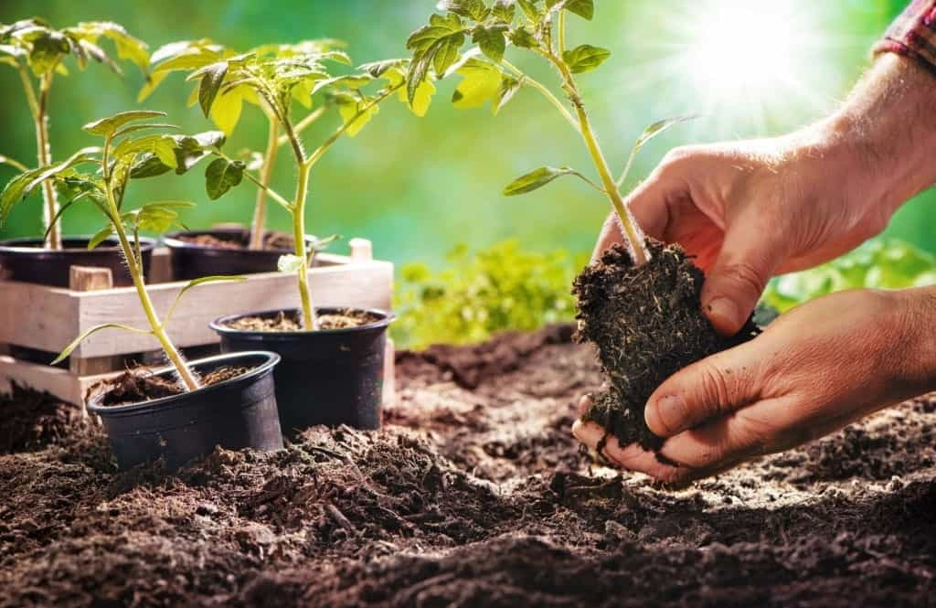 Why Preppers Have A Survival Garden In Times Of An Emergency